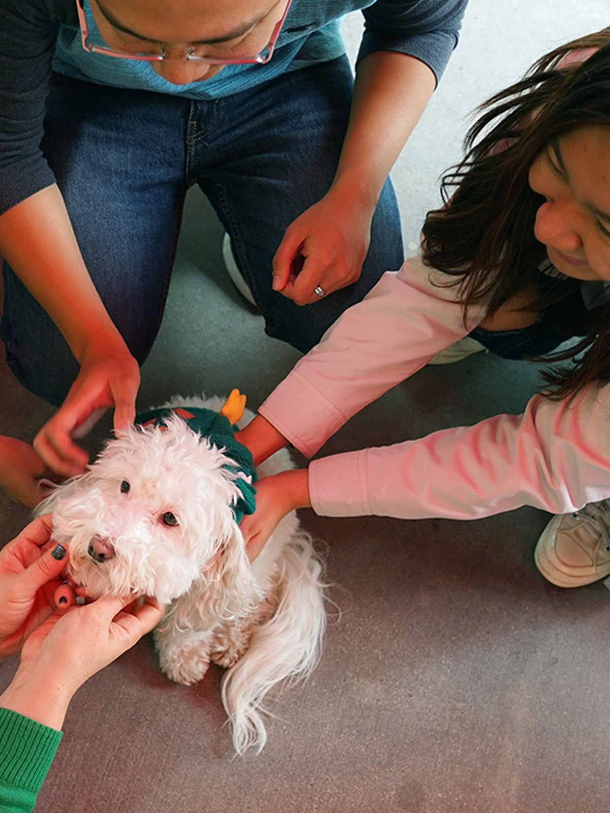 Therapy dog with students